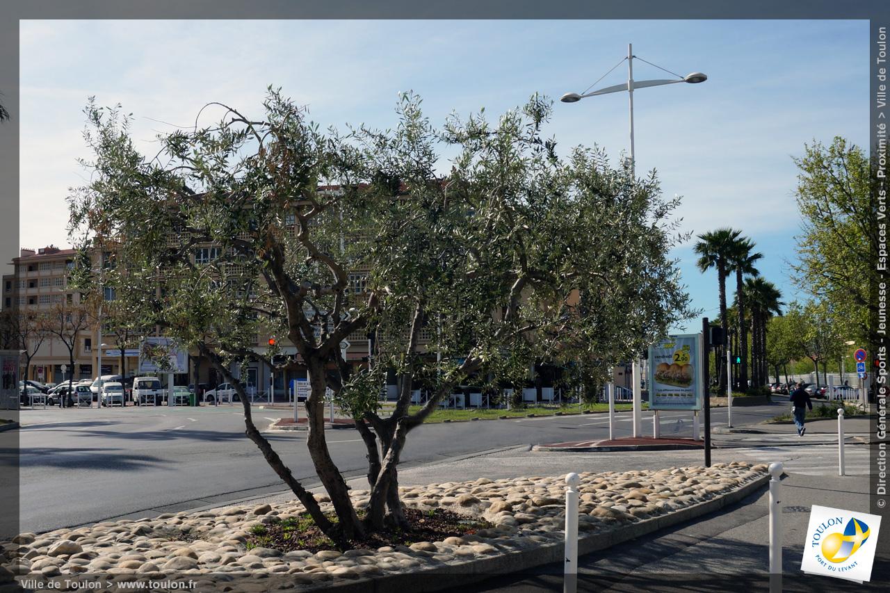 L 39 olivier site officiel de la ville de toulon - Psylle de l olivier ...